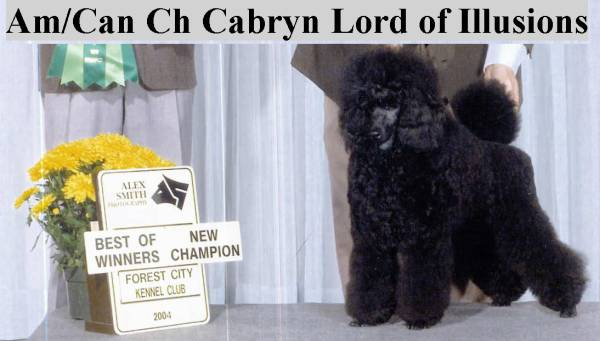 Am & Can Ch CABRYN Lord Of Illusions